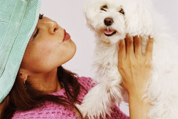 Young woman holding Maltese dog