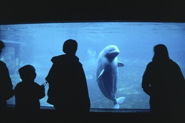 People watching a whale in an aquarium