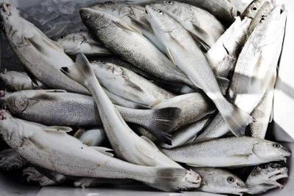 El equipo de acuicultura es necesario sin importar el tipo de pez que la granja produzca.