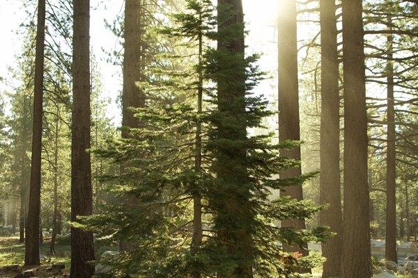 El Templo del Bosque no debe ser confundido con el Gran Árbol Deku, que es el primer templo que Link se enfrenta de niño.