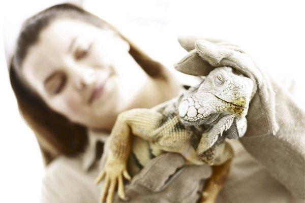 Los zoólogos son biólogos que estudian a los animales.