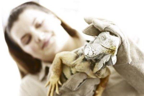 Trabajar en un zoológico, acuario, santuario animal u hospital veterinario son algunas de las carreras en la crianza de animales.