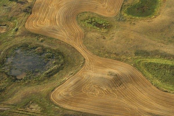 Los pastizales de la sabana pueden pasar largos períodos de tiempo sin precipitaciones.