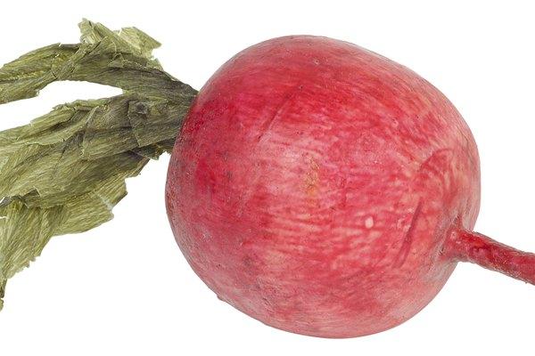 Compra remolachas con una superficie suave y bien roja, y un tallo bien firme y verde.