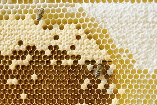 Api cells wit honey
