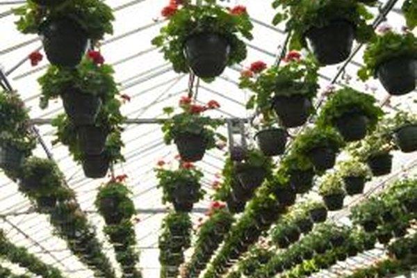 Un invernadero puede ser un negocio secundario rentable o una actividad lucrativa a tiempo completo.