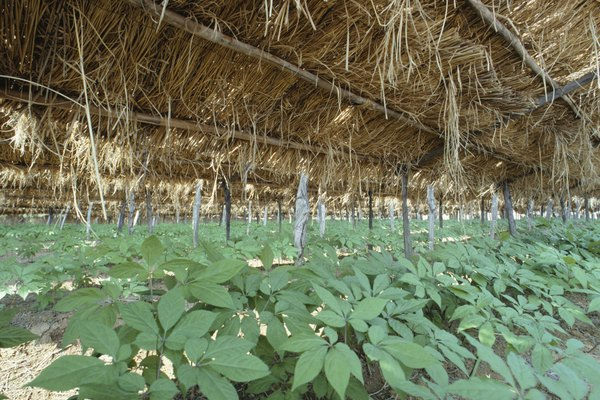 Ginseng farm, South Korea