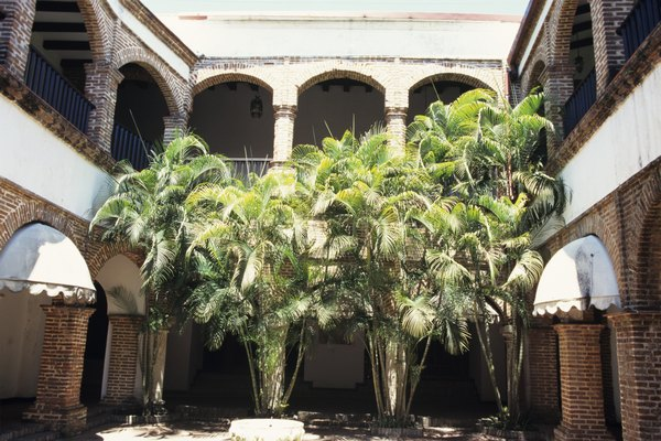 Palm trees in courtyard, Santo Domingo