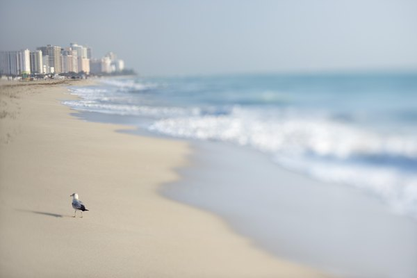 Gull on beach in Miami