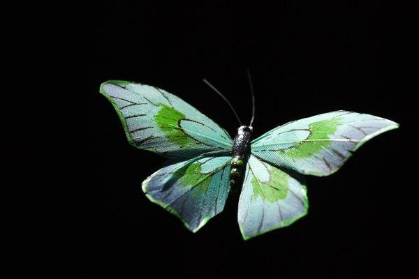 Las mariposas demuestran simetría de reflexión.
