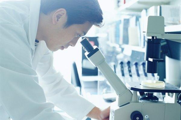 El microscopio de disección permite observar especímenes vivos, como insectos.
