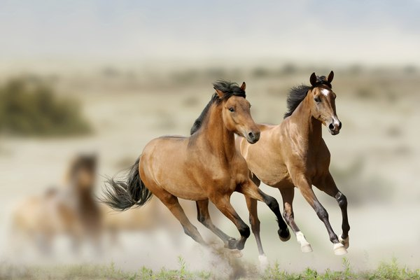 horses in prairies