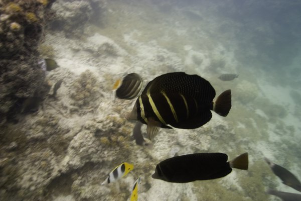Group of fish on reef in ocean