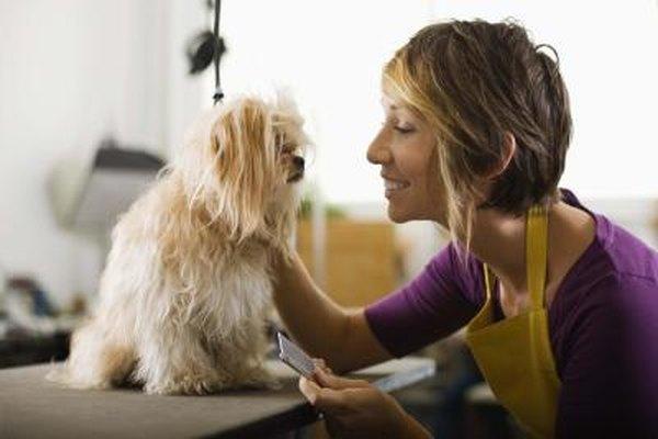 Un peluquero de perros con mucho trabajo puede atender de ocho a 10 perros diarios.