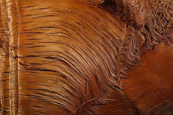 Un nudo flojo, también conocido como un nudo negro, se produce cuando una rama muerta se incrusta en el tronco del árbol en crecimiento