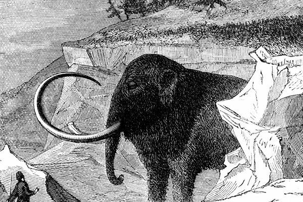 El mamut logró sobrevivir la Edad de Hielo, pero de todos modos se extinguió tiempo después.