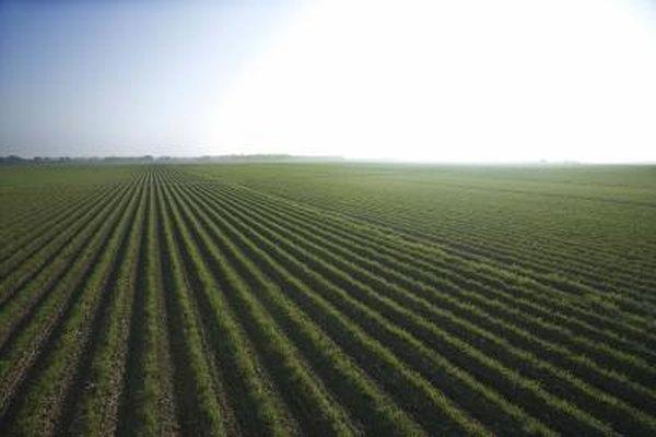 Existen muchas deducciones de impuestos en la agricultura.