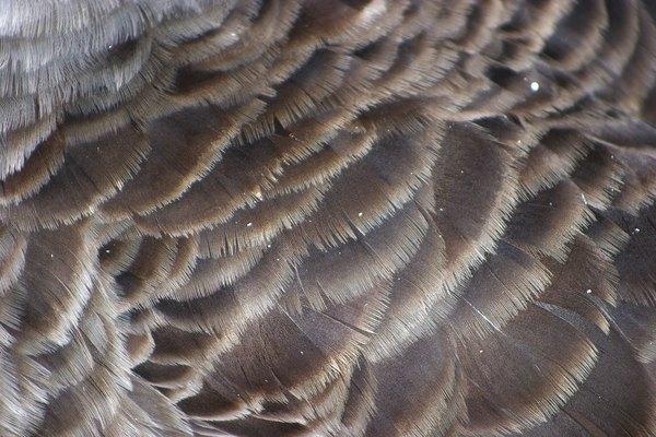 Usa plumas reales para un pájaro realista o plumas falsas para un trabajo de arte con colores brillantes.