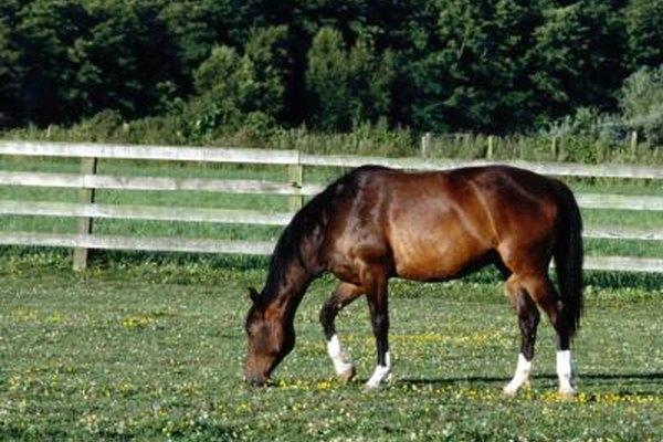 Las lecciones de equitación son una fuente de ingresos en un rancho.