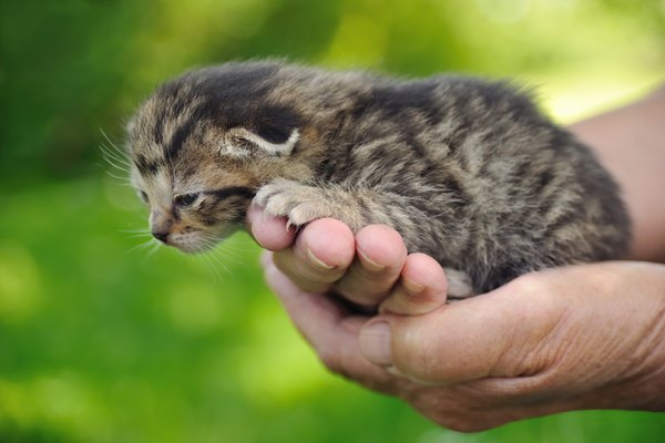 Seniors hands holding kitten