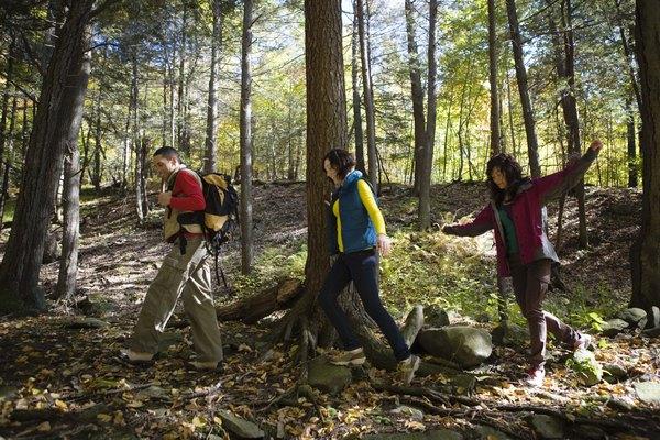 Un bosque templado es un tipo de ecosistema