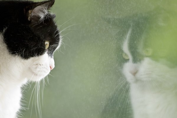 Cat looking at his reflection