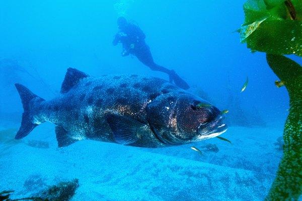 Un pez en el mar.