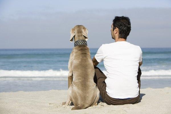 Las orejas son una parte importante de la anatomía de los perros.