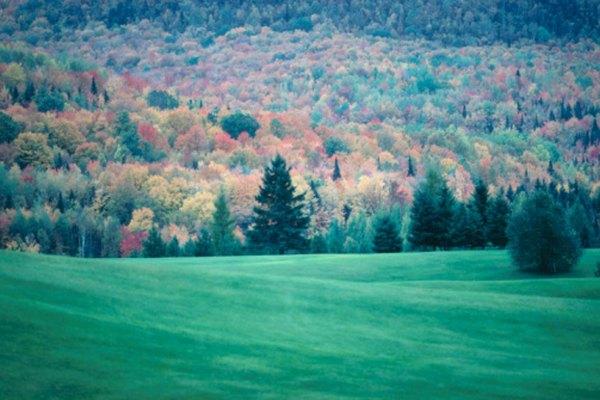 Los bosques caducifolios son aquellos en los que los árboles pierden sus hojas en el otoño.