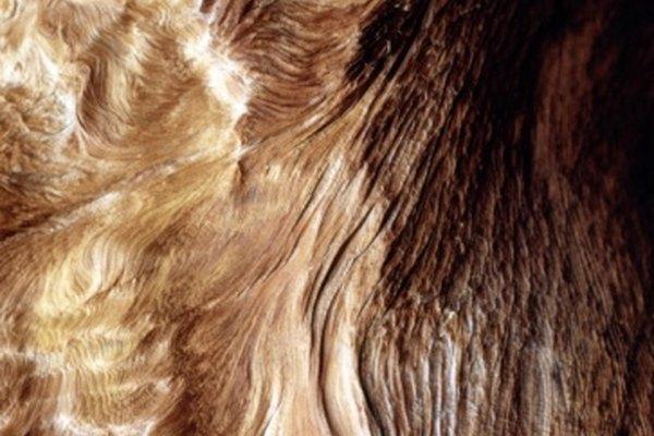 Los nudos a menudo contienen remolinos complejos y distintivos de grano de madera.
