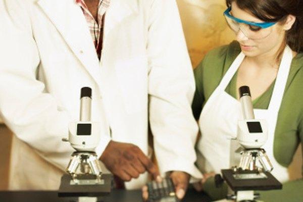 Determinar el ancho del campo de vista permite medir el mundo microscópico.