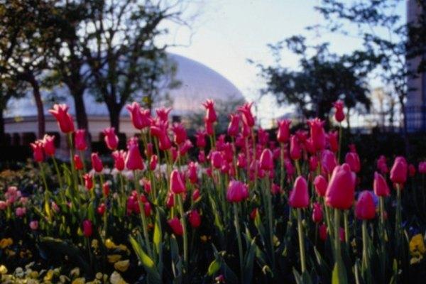El clima templado de Salt Lake City atrae a muchos nuevos residentes cada año.