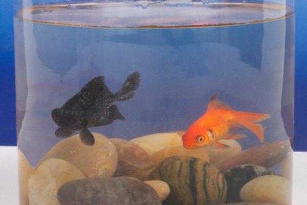 Mantener los niveles de pH correcto en un tanque contribuye a la salud de los peces.