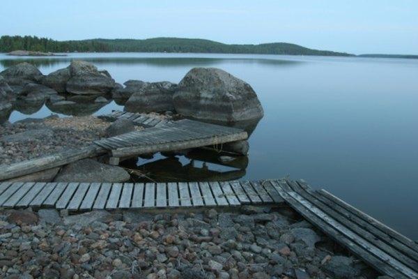 La costa rocosa presenta desafíos particulares para los animales.