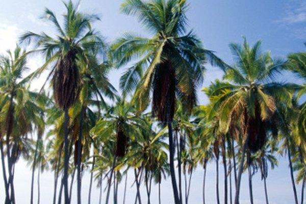 Antes de poder explorar las islas, los propietarios de un pasaporte mexicano deben entregar otros documentos.