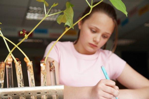 Los niños pueden entender los conceptos básicos de un método científico.