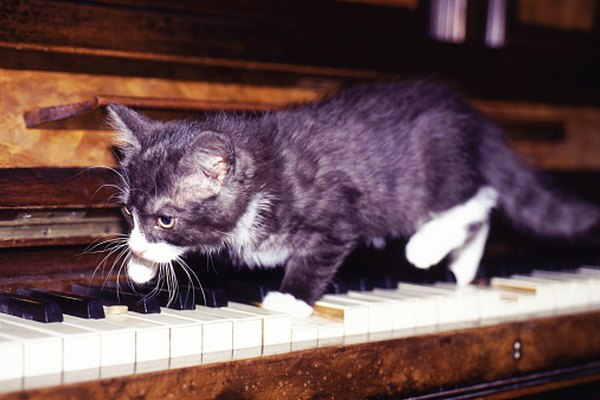El pelo de gato puede ser aspirado del piano.