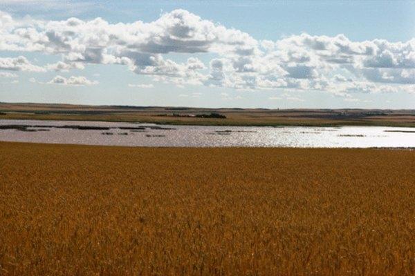 Los biomas de pastizales comparten factores abióticos.