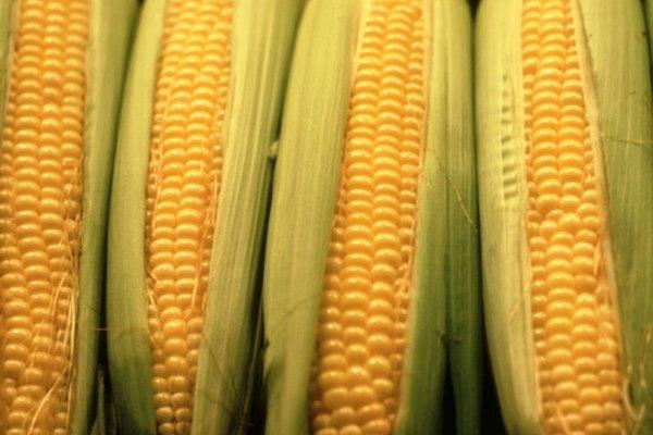 Asegúrate de que tu cosecha de maíz es segura para comer protegiéndola de las infecciones por hongos.