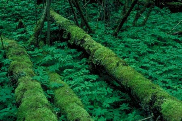La mala calidad del suelo y las densas lluvias permiten que la descomposición ocurra rápidamente.