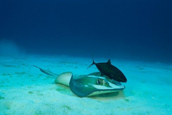 Hay relaciones simbióticas entre muchos animales del bioma marino.