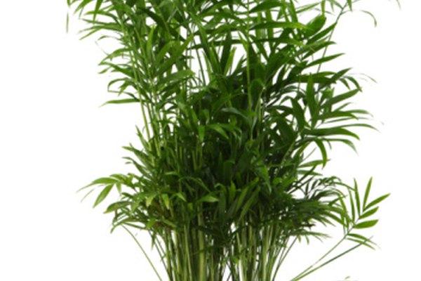 Una planta de interior puede proyectar una sombra y tratar de enfriar las cajas.
