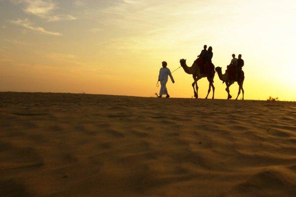 Los camellos son un buen ejemplo de animales que se han adaptado al desierto.