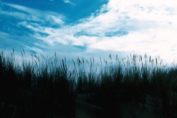 Las dunas costeras, de un ecosistema de dunas, es la zona en la que la sucesión primaria comienza.