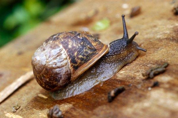 Es interesante observar los caracoles cuando están en un ecosistema cerrado.