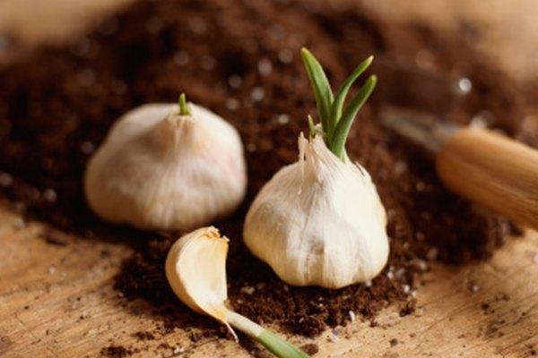 Existe un producto Miracle Gro para todo tipo de plantas.
