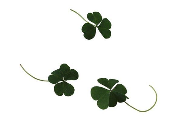 Los tréboles o shamrocks representan el orgullo irlandés.