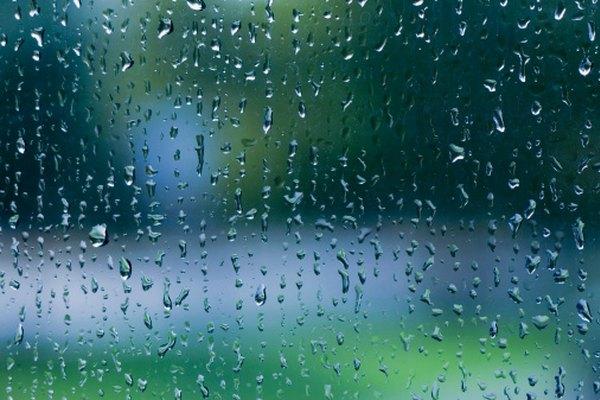 La lluvia es esencial para la reproducción de las hepáticas.