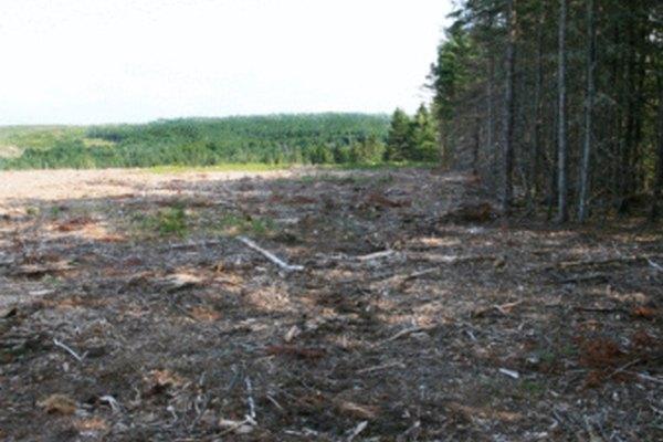 La deforestación destruye el hábitat de los animales.