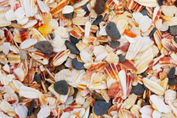 Las conchas agregan sensación de realismo a una decoración náutica.